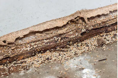 Termite Inspection Apple Valley MN